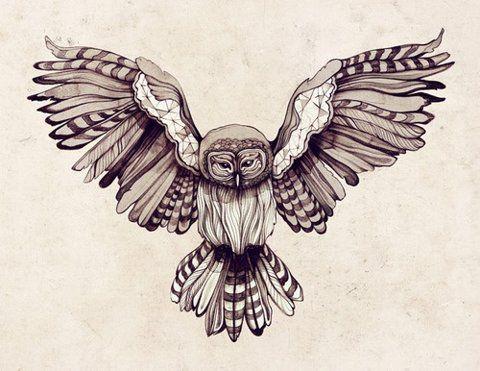 Tattoos / Owl illustration