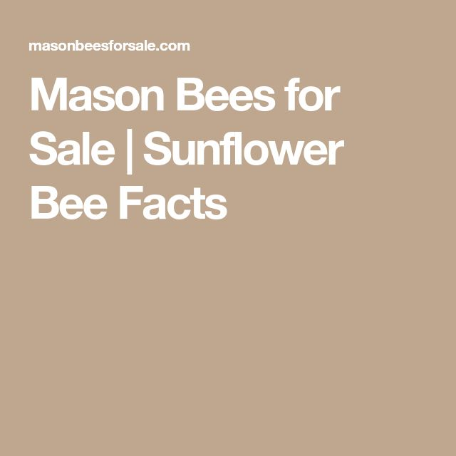 Mason Bees for Sale | Sunflower Bee Facts
