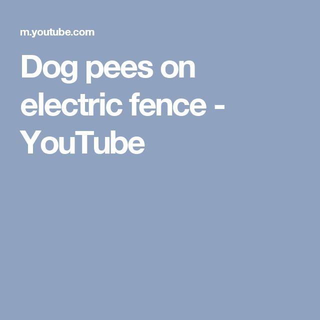 Dog pees on electric fence - YouTube