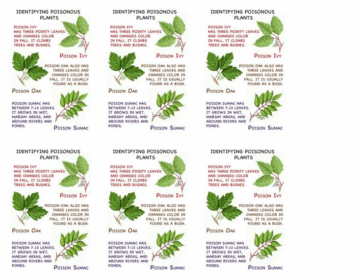 31 best images about poison oak girl scout presentation on