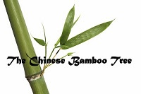 the Chinese Bamboo Tree story from 7 habits of Highly effective families