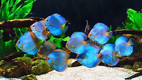 TOP 7 AQUARIUM DECORATING TIPS | Home aquarium tips | Explore Fluval