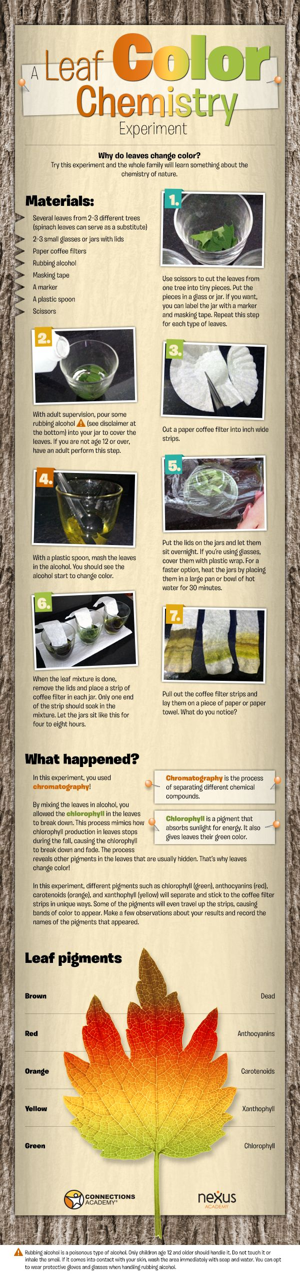 25+ best ideas about Chemistry experiments for kids on Pinterest ...