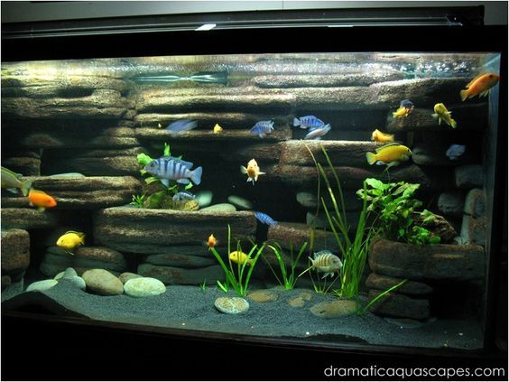 Best 25 Aquarium Backgrounds Ideas On Pinterest Fish In