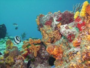 Discover The Popular Coral Reefs and Ship Wrecks of Barbados