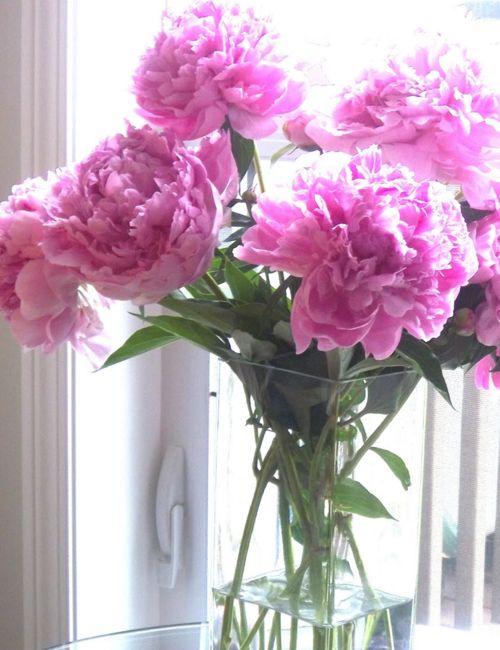 peonies: Beautiful Flower, Bright Pink, Favorite Things, Flower Power, Flower Brightening, Fresh Flower, Pink Peonies, Cut Flower, Favorite Flower