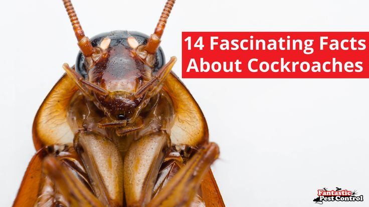 We've all seen the fact lists about cockroaches. Here are 14 new facts about this fascinating pest that we just cannot not 'WOW' at these!