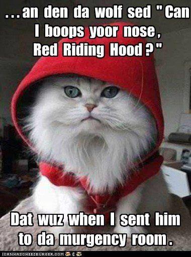 bucky the cat