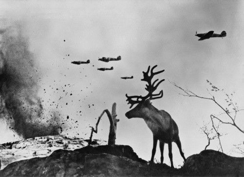 Stag during Soviet bombing of Seelow, Germany in 1945.: World War Ii, Drop Bombs, Russia, Yevgeni Khaldei, Historical Photo, Shells Shock, Ii Planes, Planes Drop, Shock Reindeer