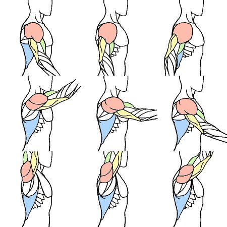 肩まわり 上級編 Kitajimaのお絵かき研究所 Anatomy 解剖