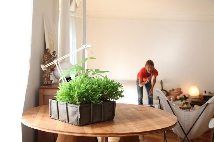 Les jardinières Bacsac aussi utilisable en intérieur! http://www.sogreendesign.com/fr/marques/bacsac/baclong-2-carres-de-2-5-litres-en-feutre-geotextile.html