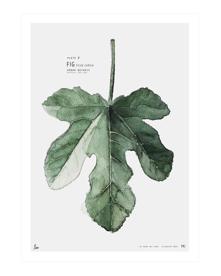 Urban Botanic - Plate B // Fig