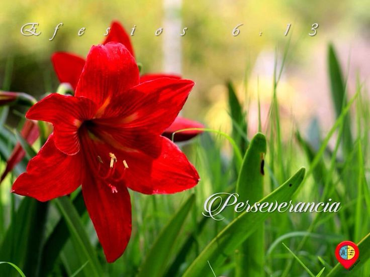 Efesios 6: 13 Perseverancia en Cristo #jesus #amor #perseverancia #efesios #mensajesbiblicos
