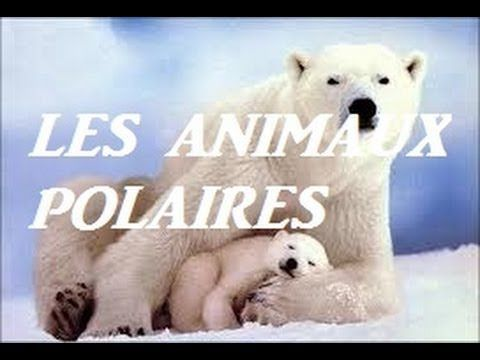 Animaux polaires ( pour enfants ) - YouTube