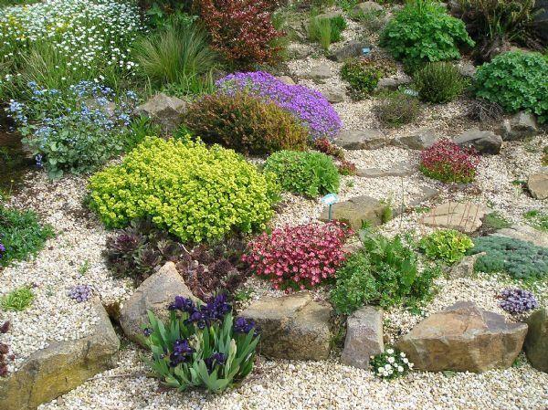 Jardin de rocaille avec sedum, sempervivum, aubriète, graminée, géranium vivace...