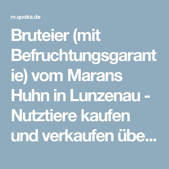 Bruteier (mit Befruchtungsgarantie) vom Marans Huhn in Lunzenau - Nutztiere kaufen und verkaufen über private Kleinanzeigen