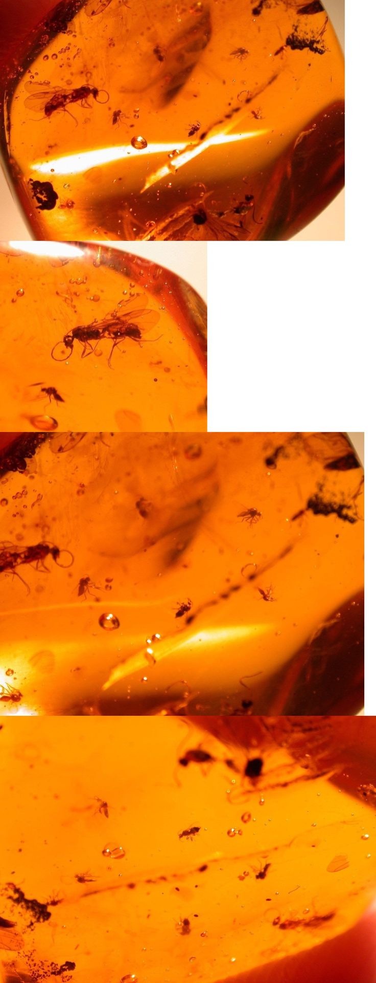 Amber 10191: Swarm Of 9 Blood Sucking Flies With 2 Winged Ants In Authentic Dominican Amber BUY IT NOW ONLY: $44.0