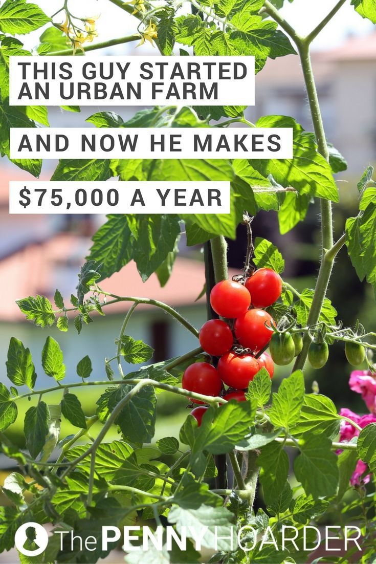 It all started with an ice storm. That's what motivated Curtis Stone to start his urban farm -- and now it brings in $75,000 a year. Here's how he built his business. /thepennyhoarder/
