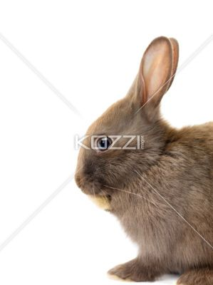 easter rabbit - Easter rabbit isolated on white background
