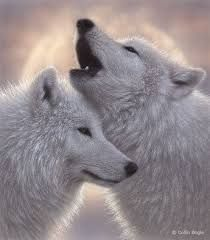 Kuvahaun tulos haulle nice wolves