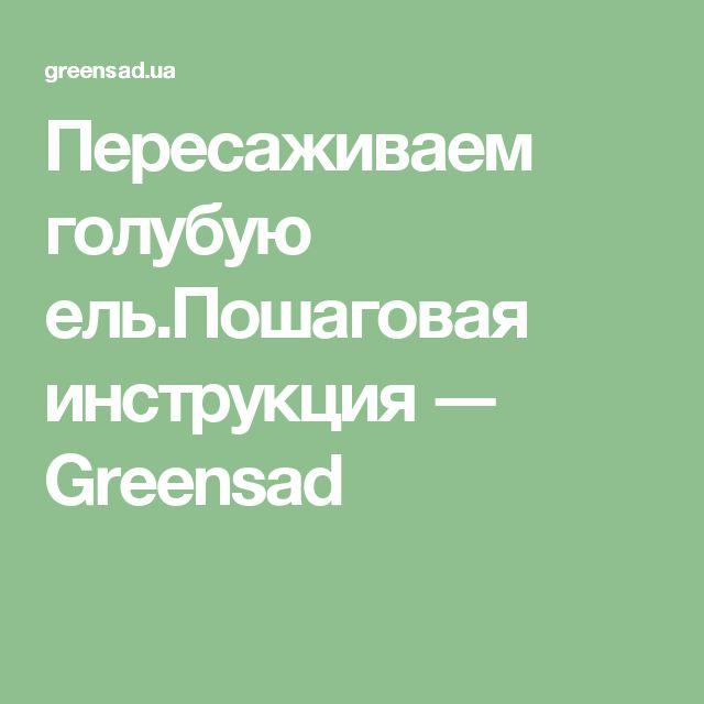 Пересаживаем голубую ель.Пошаговая инструкция ― Greensad