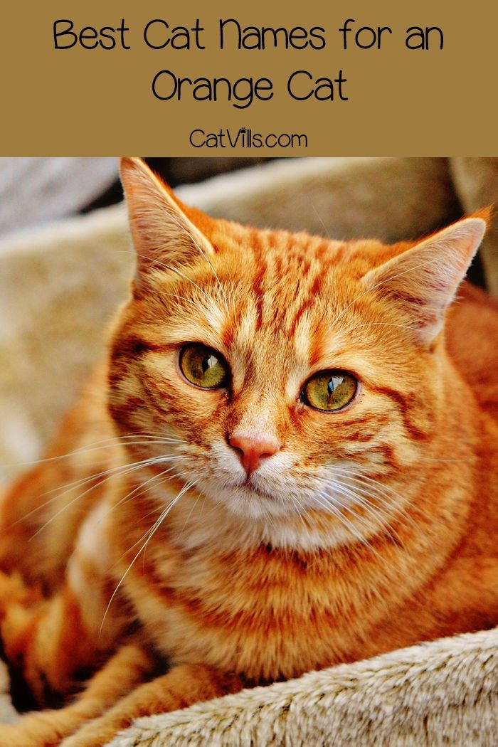 Top 10 Orange Cat Names for Your New Ginger Tabby Cute
