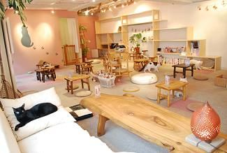 Cateriam Cat Cafe   Japan Ooo meow