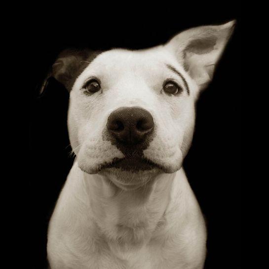 Traer Scott's Shelter Dogs - 01