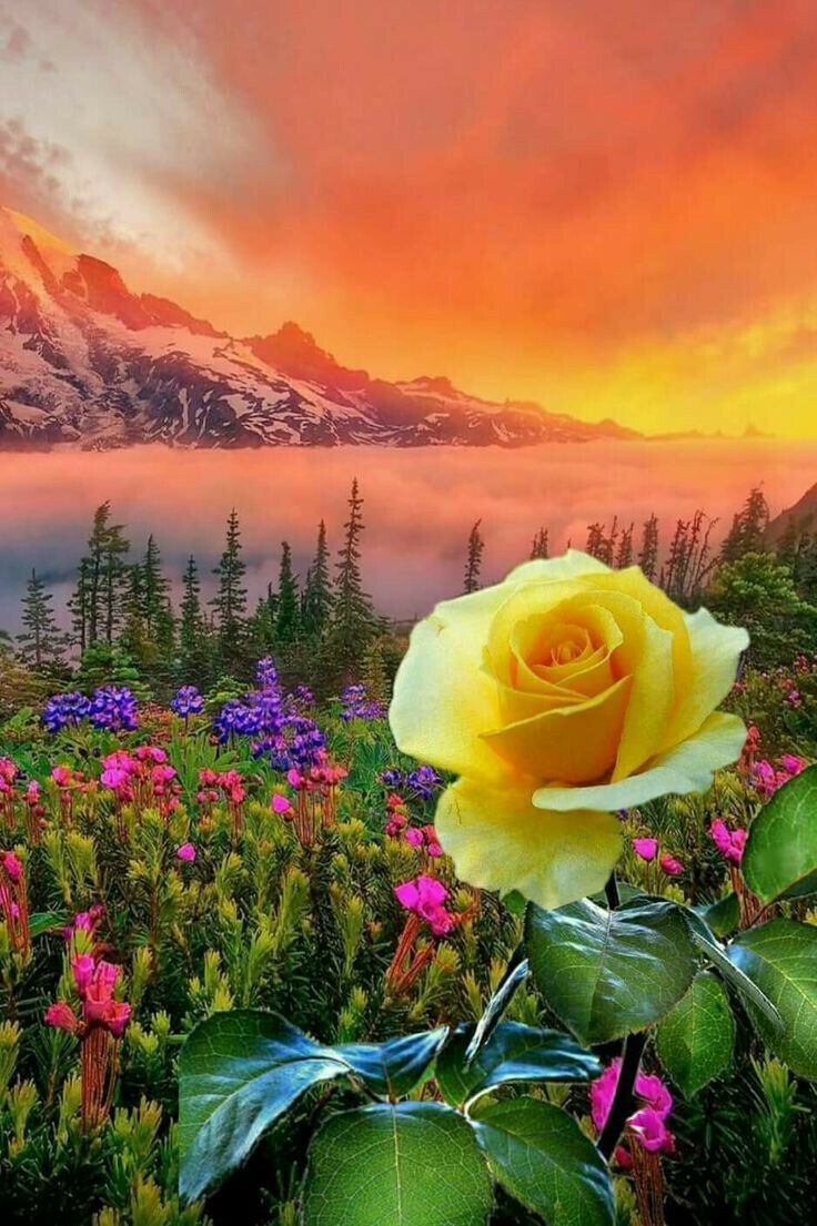 Good Morning Breathtaking View Amazing Beauty Landscape Beautiful Flowers Pictures Rose Images Amazing Flowers