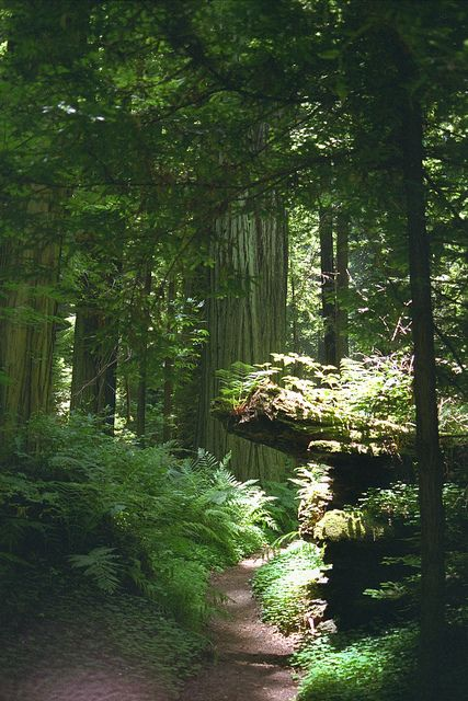 Redwoods, California-- a place I still need to visit!