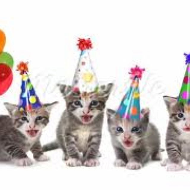 17 Best Images About #Cat Birthdays On Pinterest