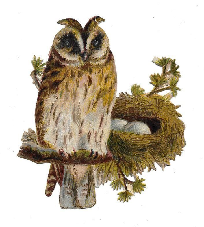 Victorian Die Cut Scrap Owl and her Nest of Eggs: