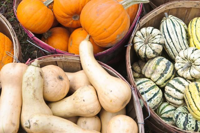 Best Ways to Preserve Pumpkin & Other Winter Squashes- Including guidelines for pressure canning in chunks.