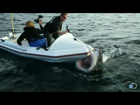Watch As A 6 Meter Long Great White Shark Charges A Film Crew's Dinghy | IFLScience