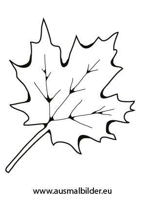Ausmalbilder Herbst - Ausmalbild Ahornblatt Ahornblatt
