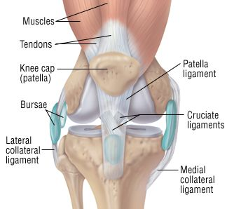A knee sprain is an injury of the ligaments, tough bands of fibrous tissue that connect the bones of the upper and lower leg at the knee joint. The knee joint has four major ligaments. Anterior cruciate ligament (ACL)— The ACL and the pos...
