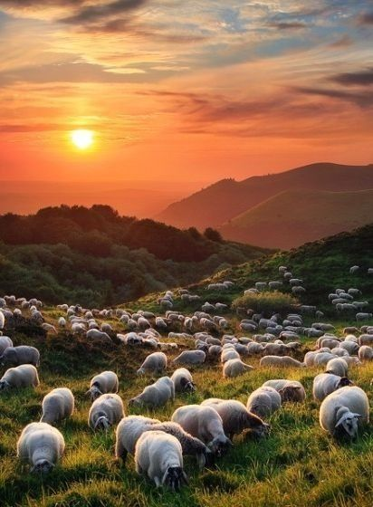 New Zealand:  where there's more sheep than people  X) I don't think I mind that though.