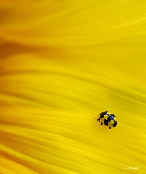 Yellow on Yellow by Niko Vass, via 500px