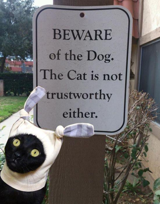 Beware Of The Cat …