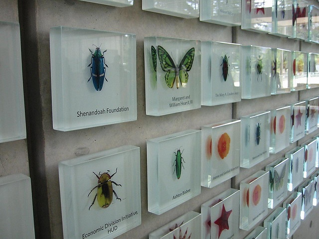 Donor wall signs at California Academy of Sciences, San ...