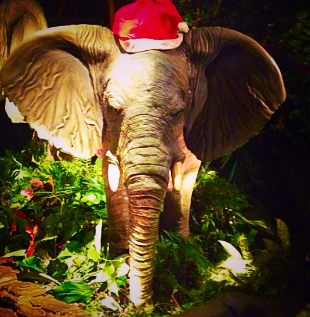 Tuki Makita is getting into the festive spirit with his oversized Santa hat! Imagine what size a full grown adult would need! http://www.therainforestcafe.co.uk/christmas.asp