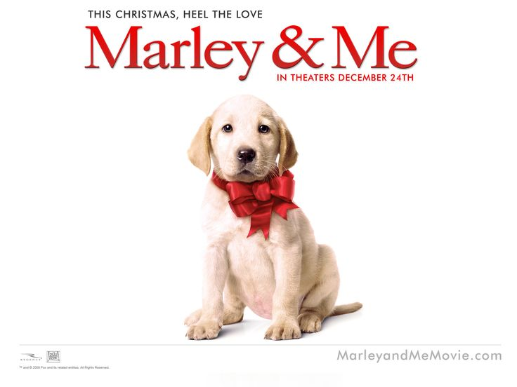 Marley & Me Dog - This HD Marley & Me Dog wallpaper is based on Marley & Me N/A. It released on N/A and starring Owen Wilson, Jennifer Aniston, Eric Dane, Kathleen Turner. The storyline of this Comedy, Drama, Family N/A is about: A family learns important life lessons from their adorable, but naughty and... - http://muviwallpapers.com/marley-me-dog.html #Amp, #Dog, #Marley #Movies