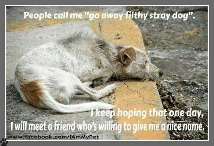 If you see a stray dog do something to help him.
