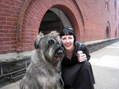 84 Best Giant Schnauzers Images On Pinterest Giant