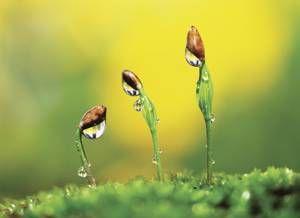 Vegetation as a Natural Resource