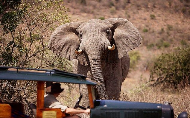How to pull a Kenyan honeymoon safari.....tips from an expert guide!