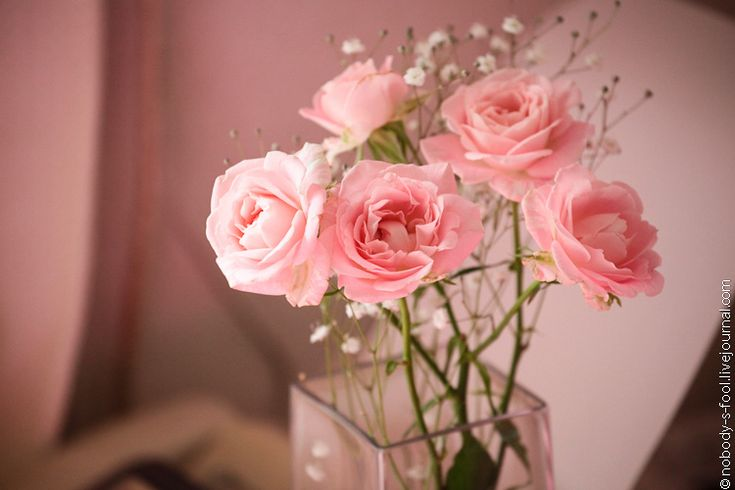 .: Favorite Flowers, Pink Dreams, Perfect Pink, Pretty Pink, Pretty Flowers, Most Beautiful Flowers, Baby Rose, Pink Rose, Flowers For M