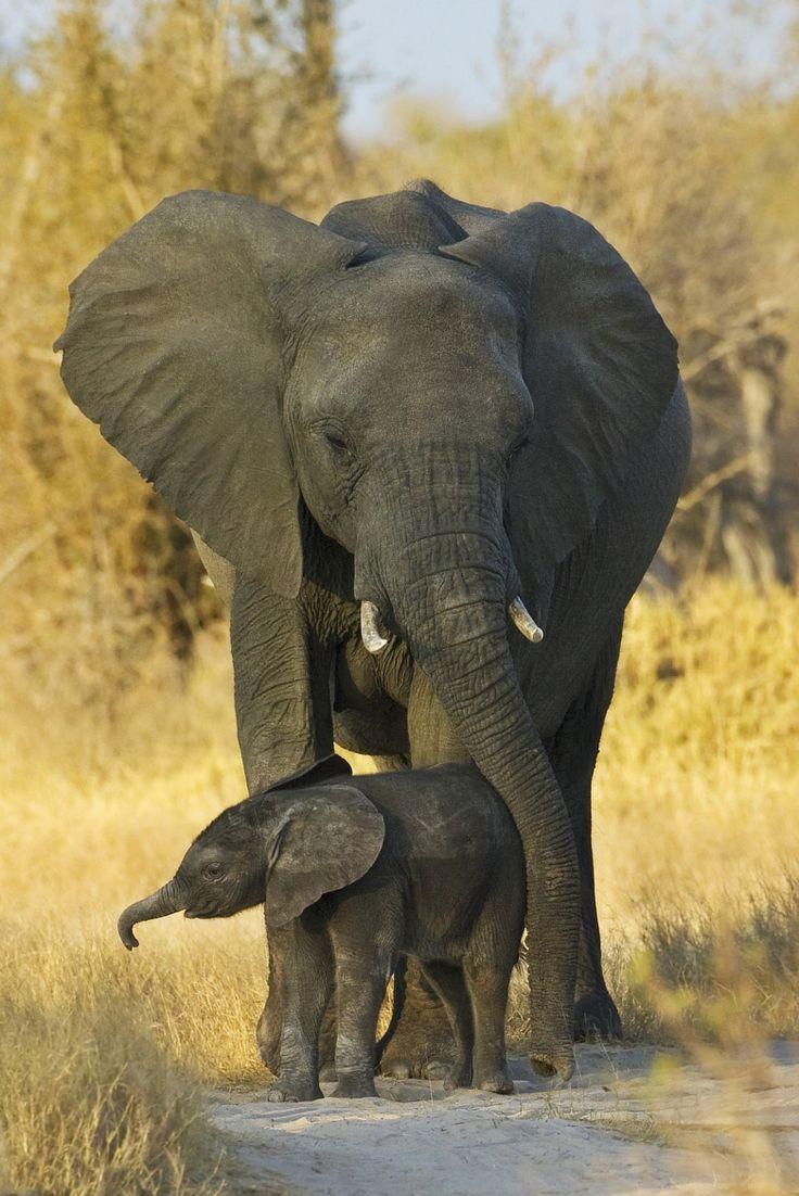 - Image elephant ...
