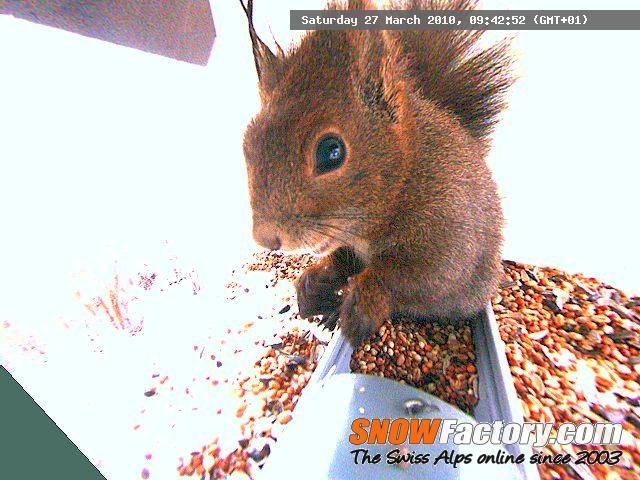 Squirrel Webcam