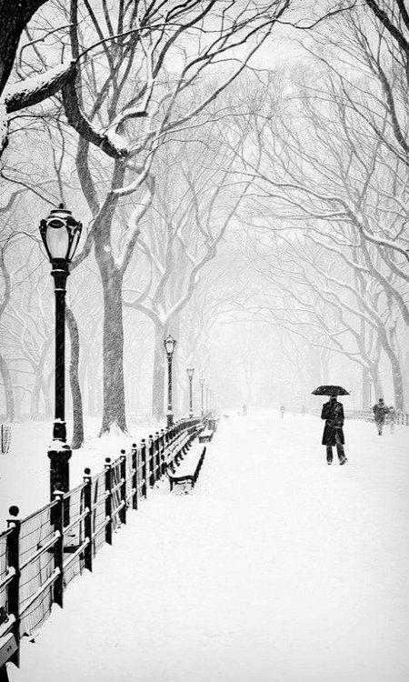Snowy Day, Central Park, New York City